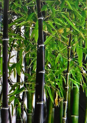 "Brown Speckled Bamboo Poles 2""D x 10'L - Bamboo Toronto Store"