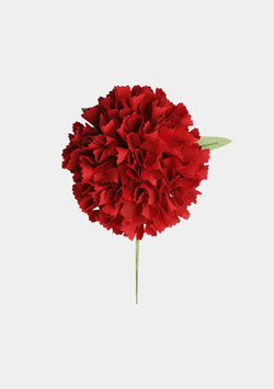 Flamenco Flower Carnation