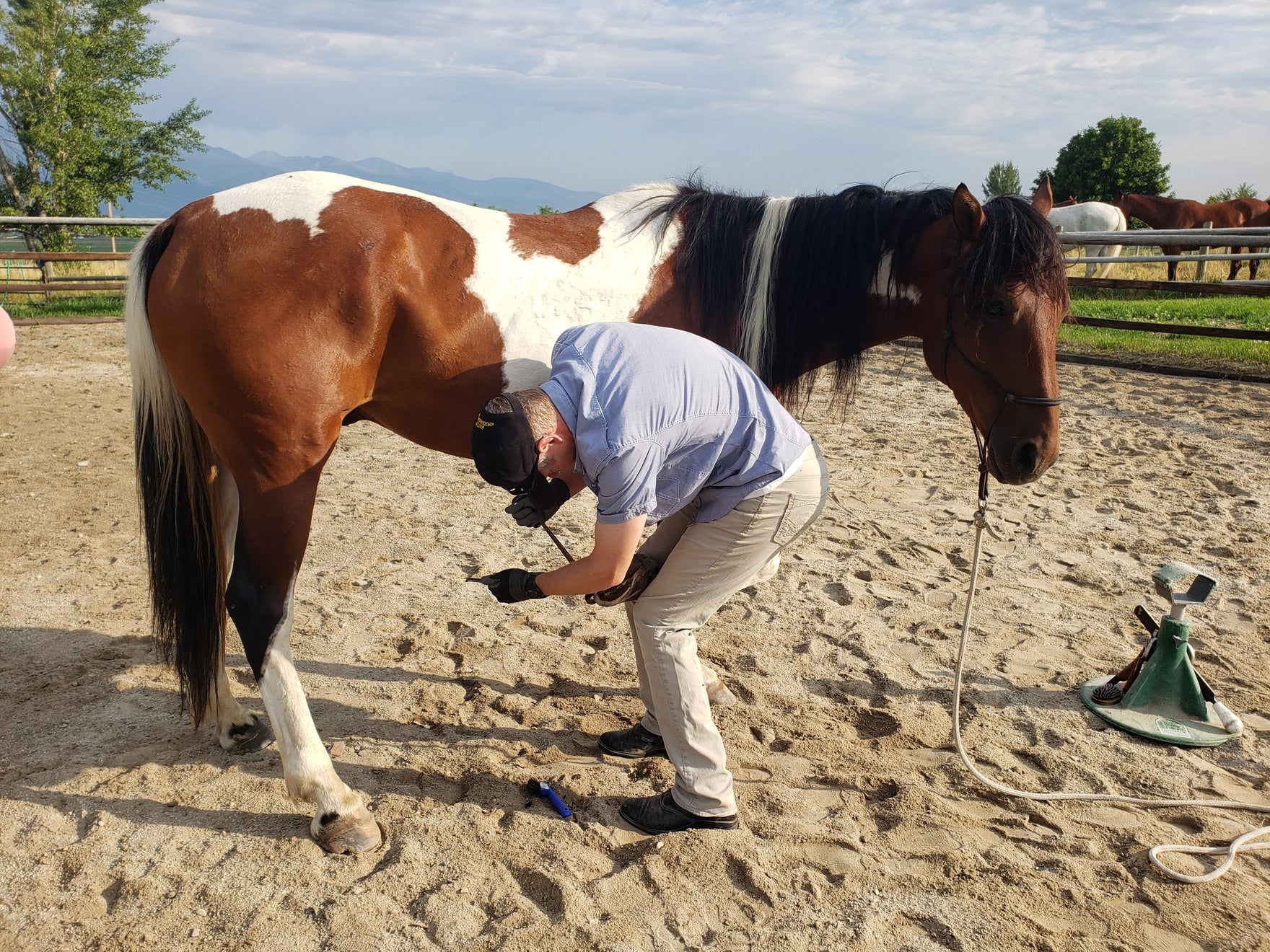 THE POWER OF POSITION - HORSE TRAINING