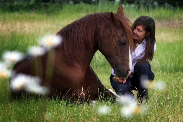 Do you want a better relationship with your horse?