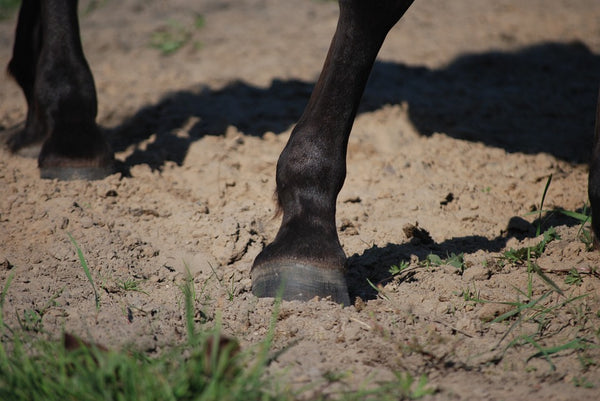 How to pick up your horse's feet!