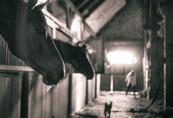 BARN DRAMA AND HOW TO AVOID IT - BY DON JESSOP