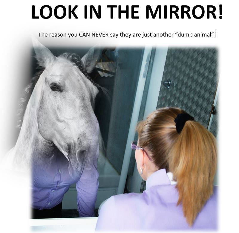 Look in the Mirror Mastery Horsemanship
