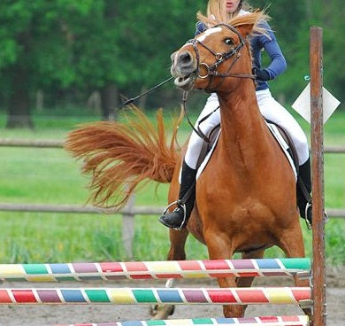 Why Horses Behave Differently at the Show