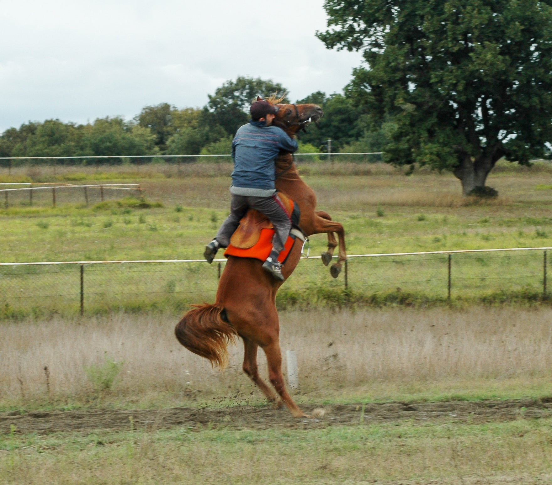 The reason I wear a helmet. Mastery Horsemanship