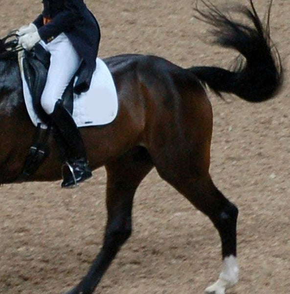 Does your horse swish his tail while riding? How to get rid of it.
