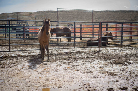 Justice BLM facility Mastery Horsemanship Don Jessop