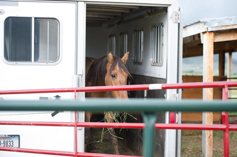 Justice Mustang, thinking about leaving the trailer