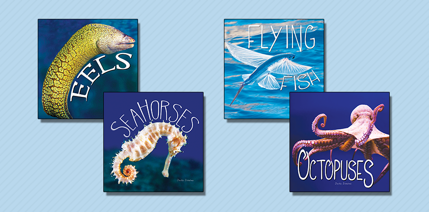 Ocean Animals - School Library Journal Review November 2017