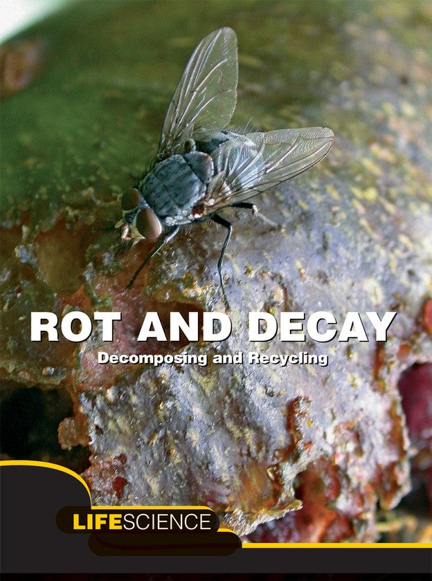 2011 - Rot and Decay (Paperback)