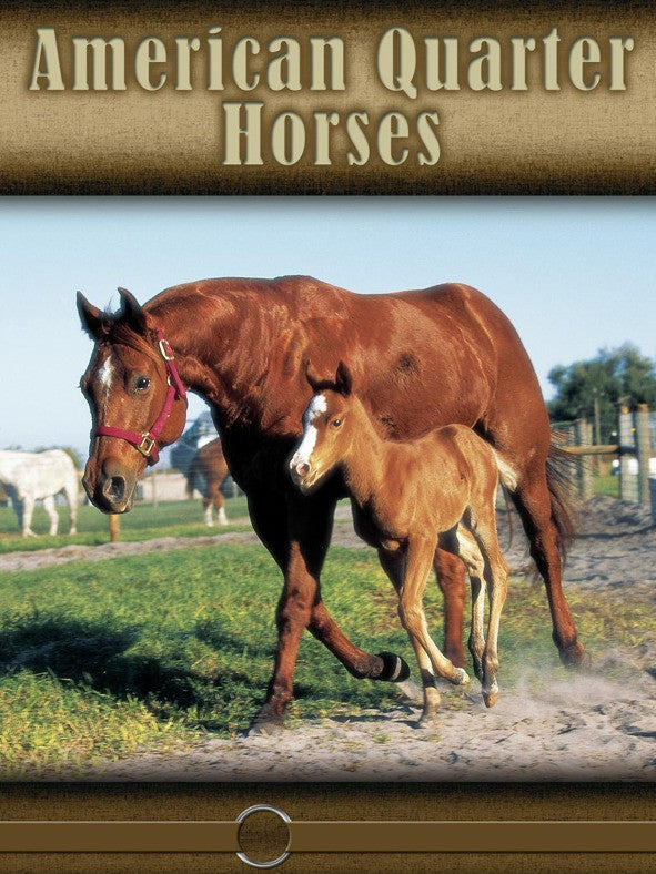 2008 - American Quarter Horse (eBook)