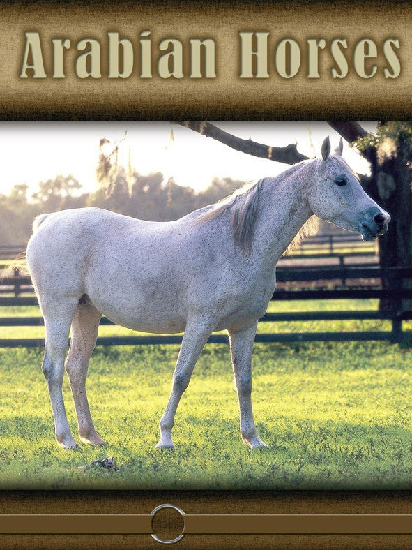 2008 - Arabian Horses (eBook)