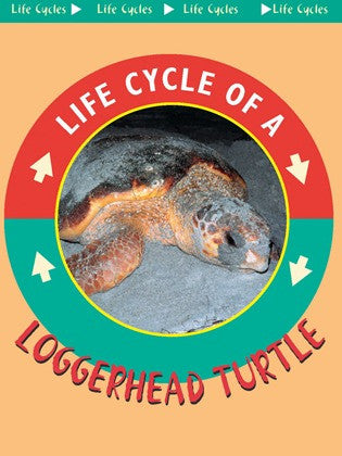 2003 - Loggerhead Turtle (eBook)