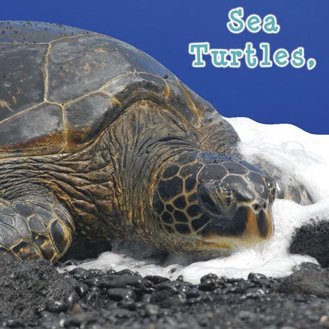 2019 - Sea Turtles, What Do You Do? (Board Book)
