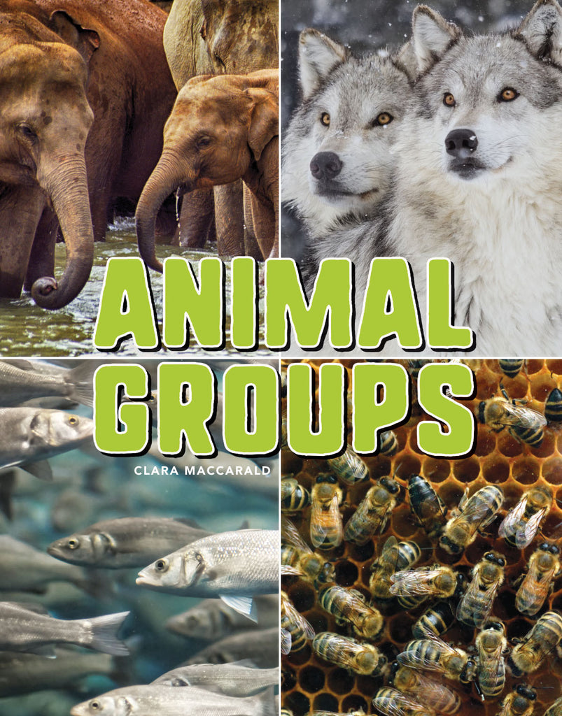 2018 - Animal Groups (Hardback)