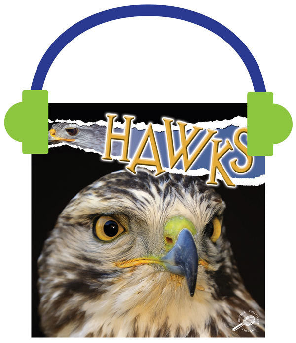 2013 - Hawks (Audio File)