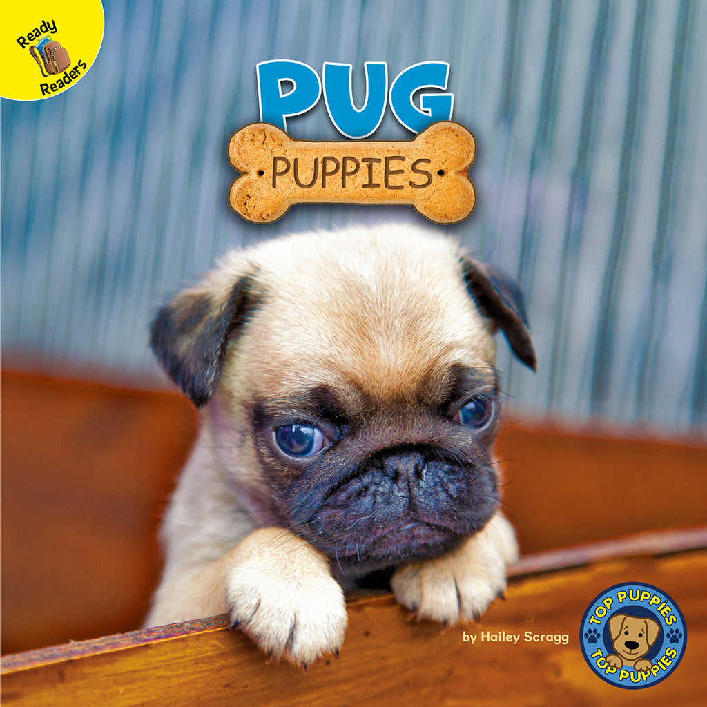 2020 - Pug Puppies (Paperback)