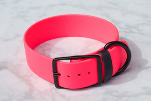 1.5 inch Bright Pink Buckle collar with Black Buckle and Black hardware