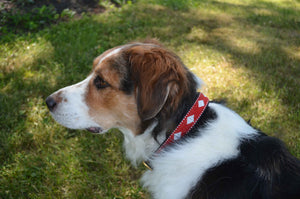 Unity Beaded Dog Collar - The Kenyan Collection