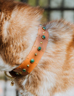 "1.5"" ASTERIA Gemstone Buckle Collar"