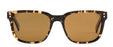 Otis Test of Time Sunglasses-Vintage Tort/Brown Polar
