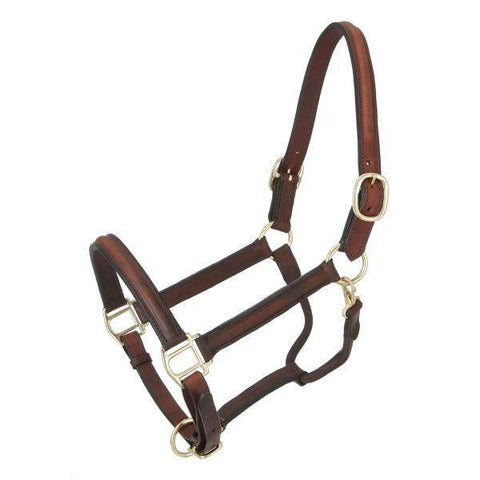 Raised and Padded Leather Halter