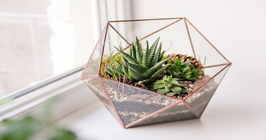 DIY Terrarium with Succulents