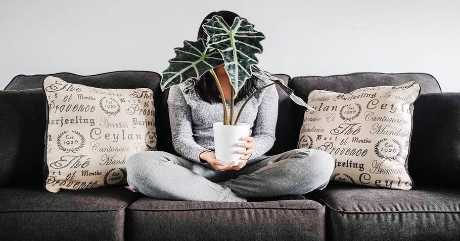 A Guide for Decorating with Houseplants