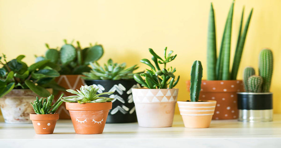 5 Houseplants for a Better Night's Sleep