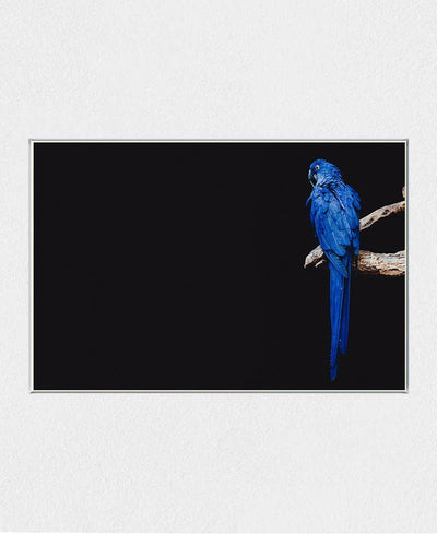 Blue Feathers Art Print Created By Unsplash