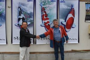 Thank You Kenji san 30 High Grade Koi from Dainichi, Isa, Oya