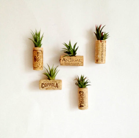 air plant cork magnets