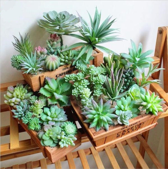 Beautiful Artificial Succulents