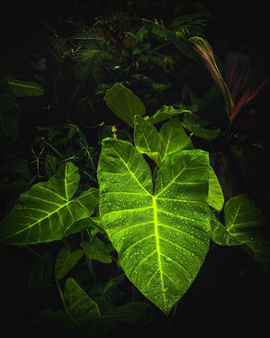 Plants on Black - Neon Jungle