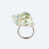 Green Cassidae Napkin Ring set