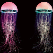 Incredible fibre-optic jellyfish chandelier with RGB LED