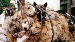 PLEASE DONATE NOW TO HELP END THE CRUEL DOG MEAT TRADE!