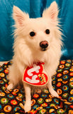 Photo realistic TY Beanie Baby Heart Tag - Dog & Pet Halloween Costume