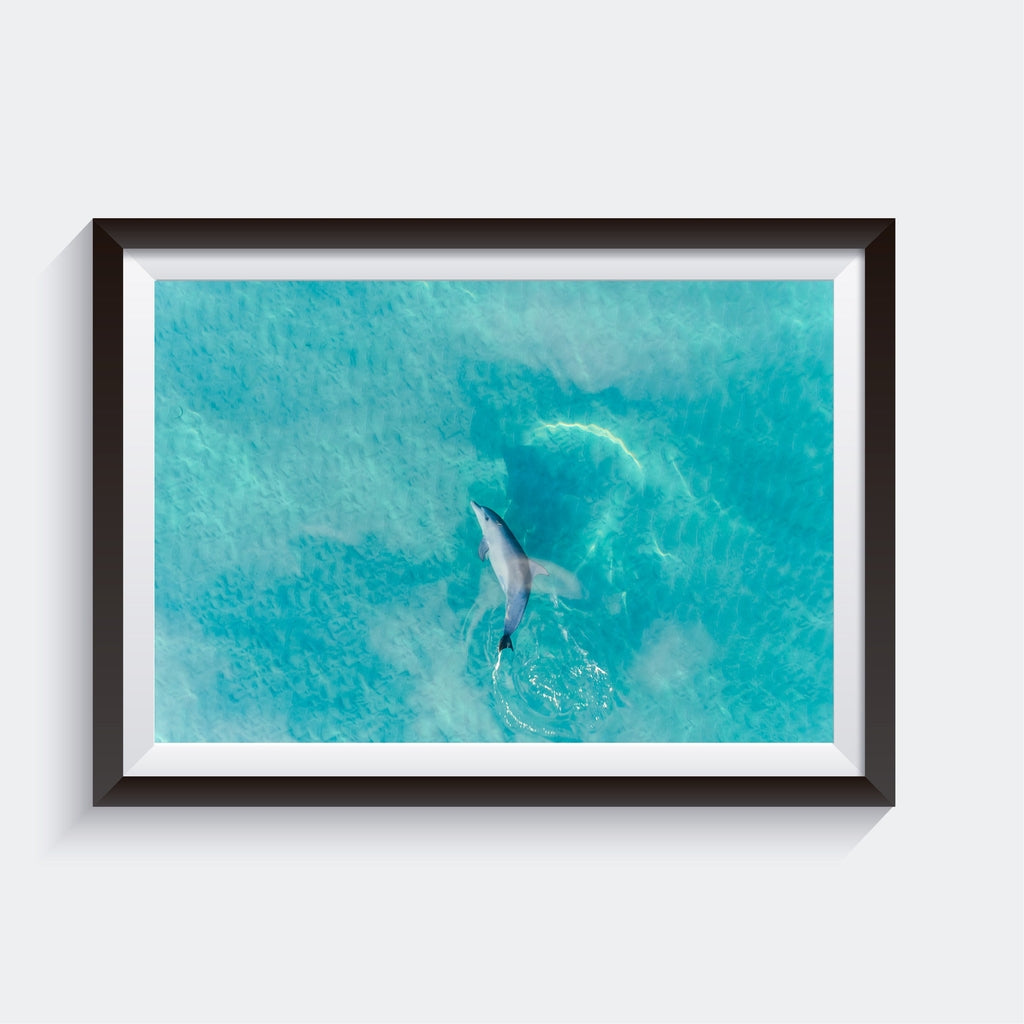 Wall Art, Dolphin, Australia, Wall Decor | AM Photo Co