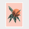 Orange Calathea