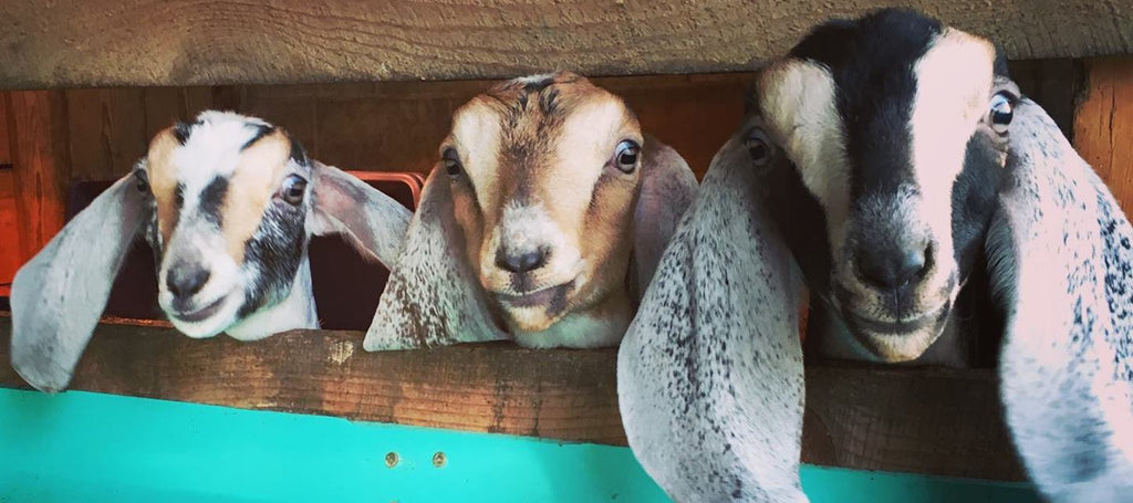 Goat Rodeo Farm & Dairy | Revittle