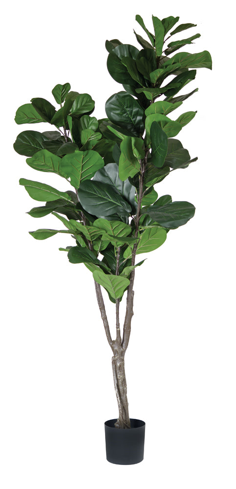 Fiddle Leaf Potted 6.5'H Polyester