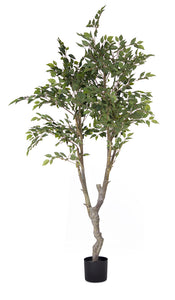 Ficus Tree Potted 6.5'H Polyester