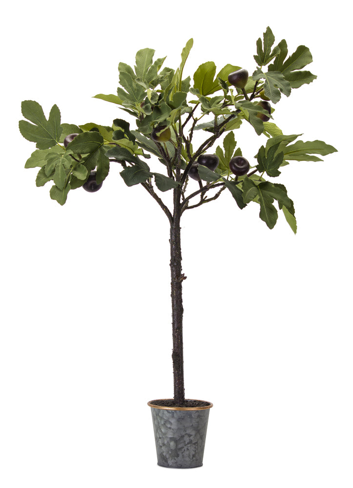 "Fig Plant Potted 35""H Polyester"
