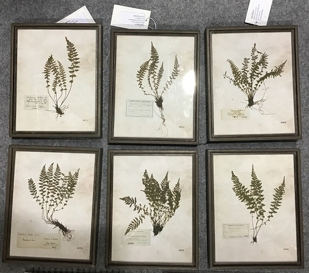 Fern Frame (Set of 6)