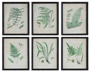 "18-1/2""W x 23-1/4""H Wood Framed Wall Décor w/ Vintage Reproduction Fern Image, 6 Styles, Truck Ship"