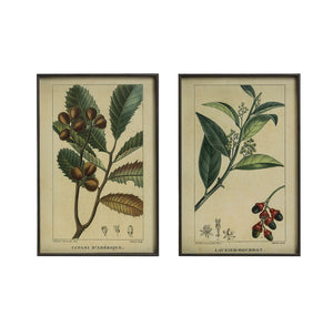 "15""W x 23-1/2""H Metal Framed Wall Décor w/ Vintage Reproduction Botanical Print, 2 Styles, Truck Ship"