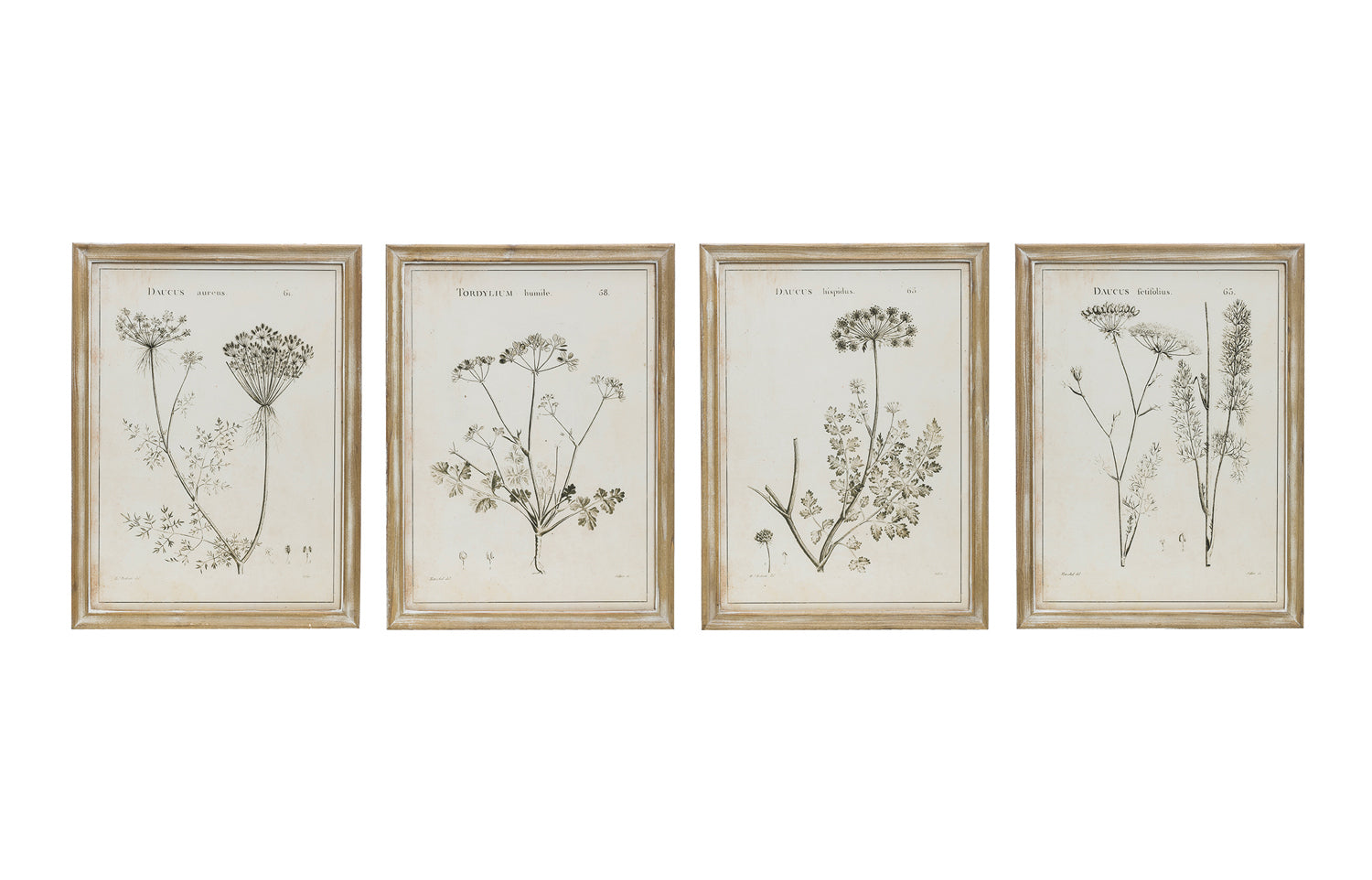 "17-3/4""W x 23-1/2""H Wood Framed Wall Décor w/ Vintage Reproduction Botanical Print, 4 Styles, Truck Ship"