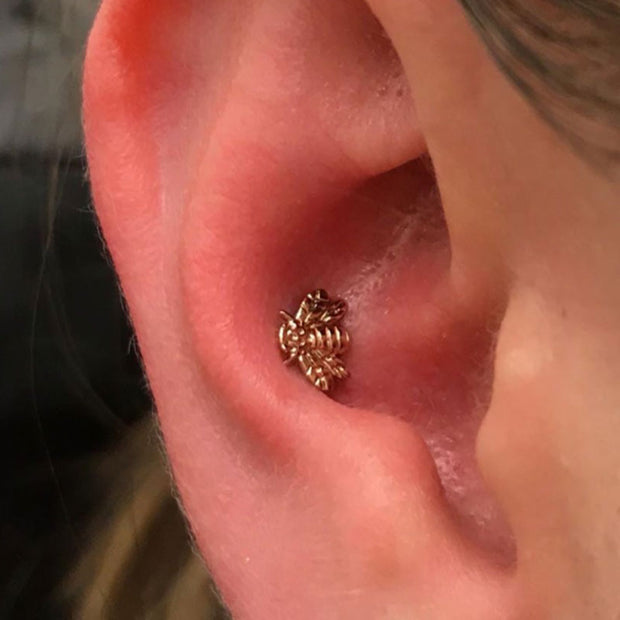 1 Conch Piercing in Newmarket