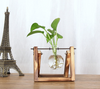 single glass terrarium